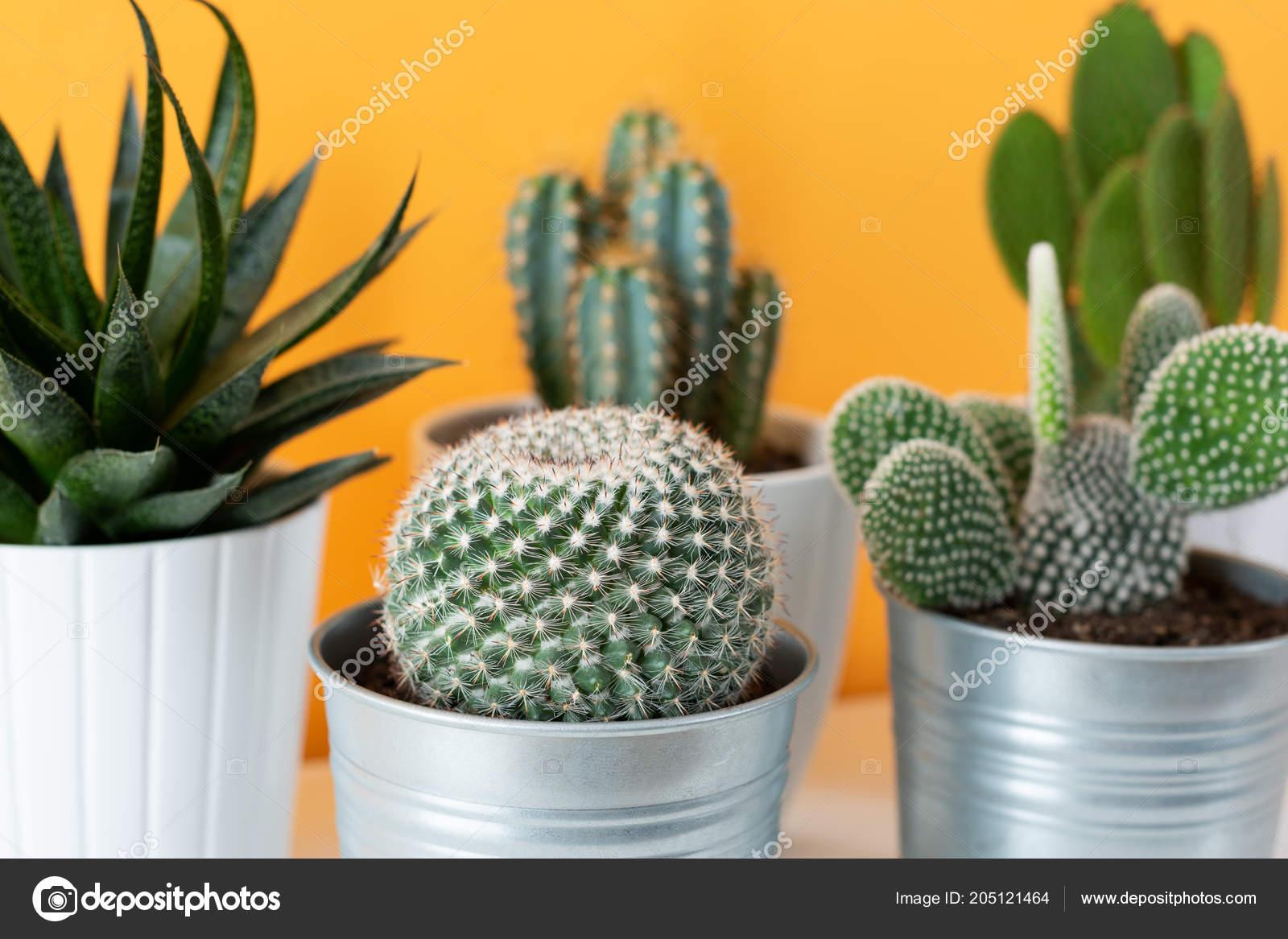 Raccolta varie piante cactus succulente pentole diverse vaso