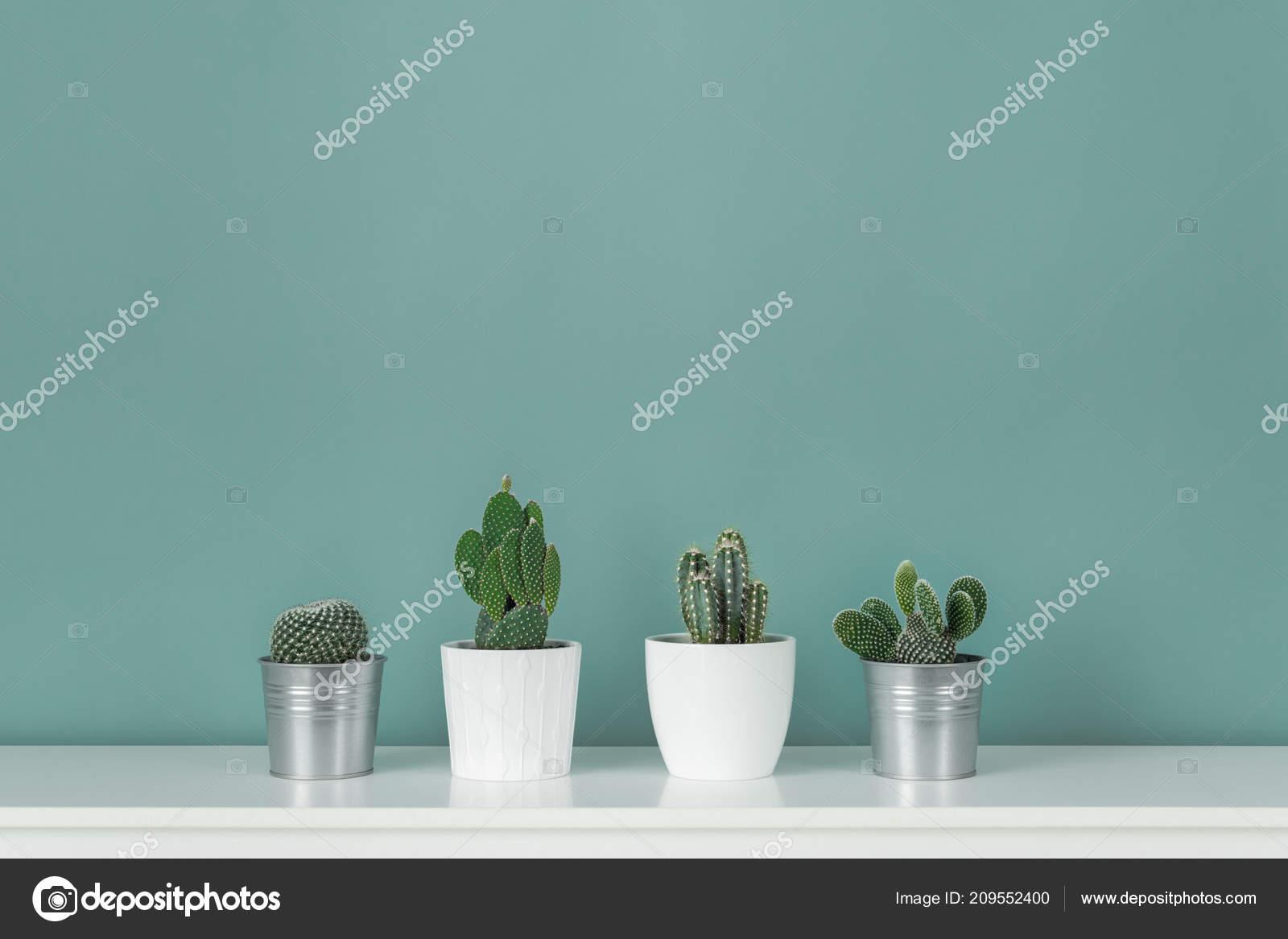 Moderne kamer decoratie collectie van diverse ingegoten cactus