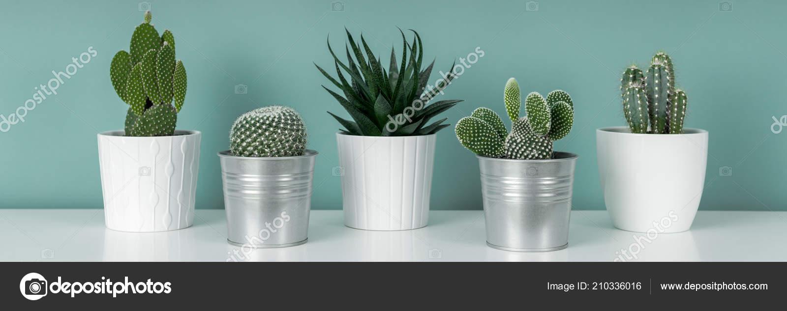 Décoration Chambre Moderne Collection Divers Pot Plantes Cactus Sur ...
