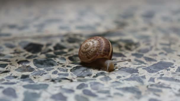 The snail is crawling on the stone floor