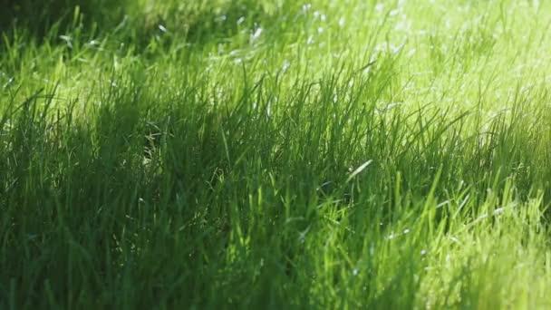 Krásné mladé zelené trávě v makro záběr. Zelené rostliny foukání větru s hloubkou ostrosti, jarní louka, slunce svítí, statické stativ zastřelil