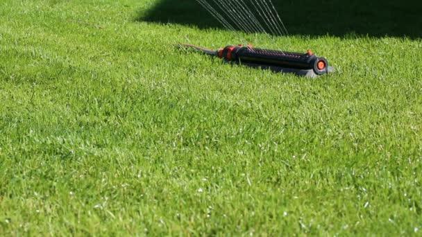 Zalévání zelené trávě na trávníku