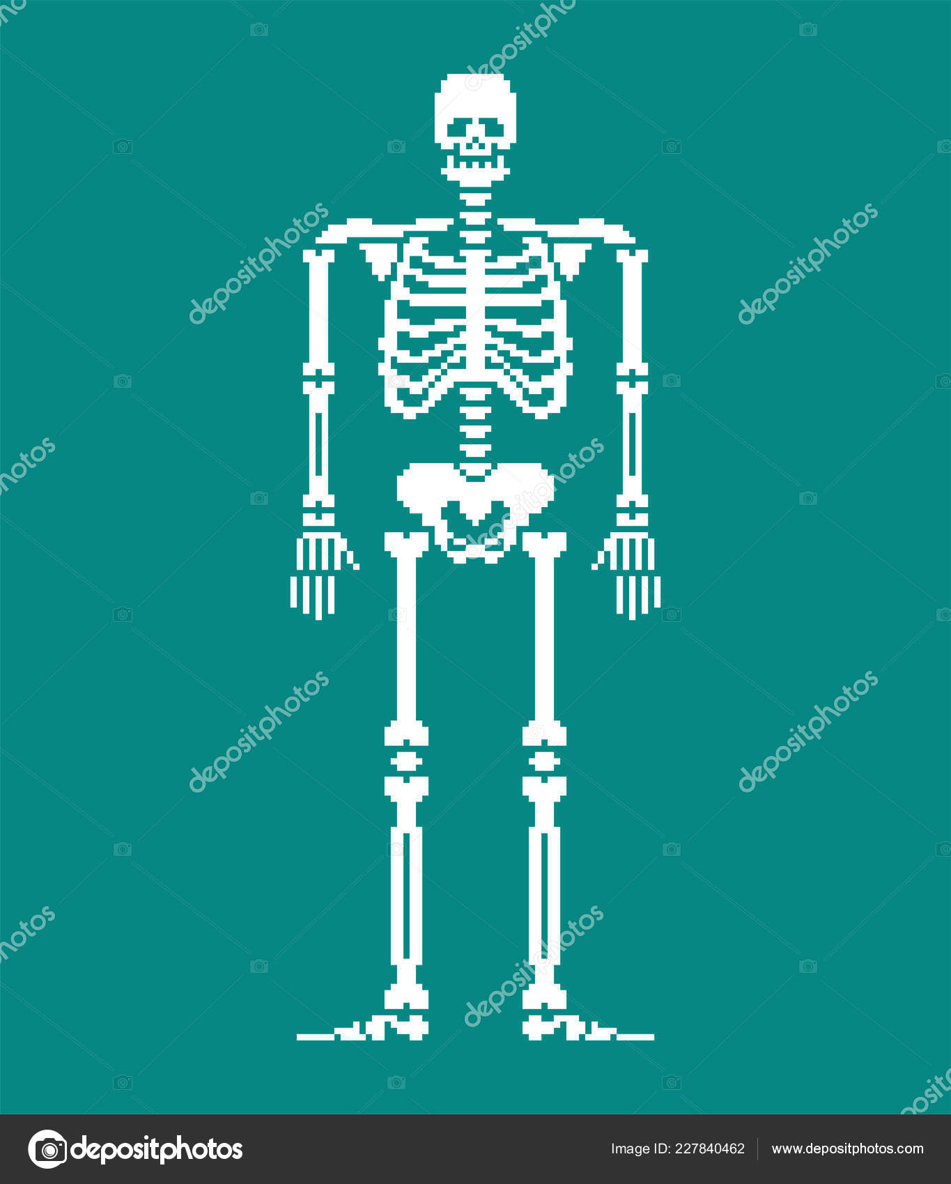 Skeleton Pixel Art Skull Bones Anatomy Bit Pixelate Pelvic Bone