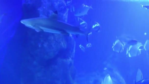 wunderschöner blauer Unterwasserblick mit umherschwimmenden Fischen und Haien