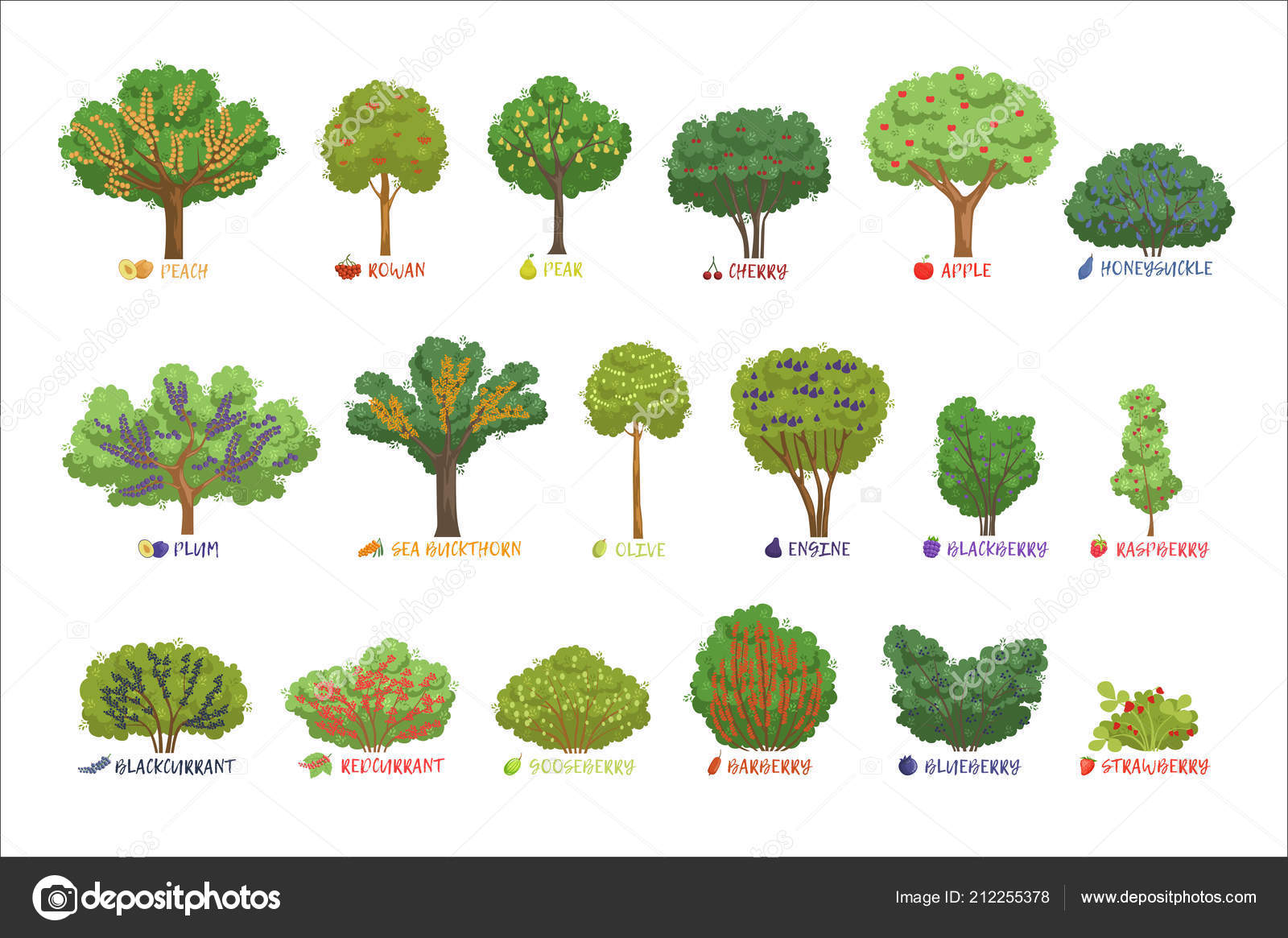 Arbustos de bayas de jard n diferentes clases con conjunto for Jardines con arboles y arbustos