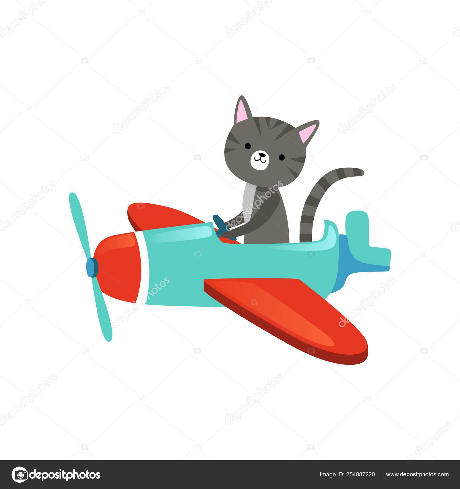 Gatinho Cinzento Com Focinho Lindo Voando Em Avioes Coloridos