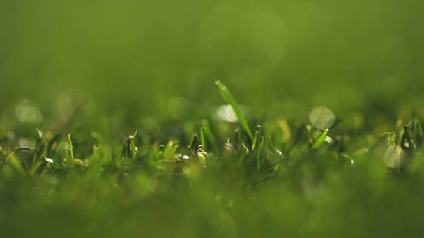 Élénk zöld fű közelkép. Fűnyíró makró