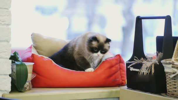 Black and white cat in cat bad