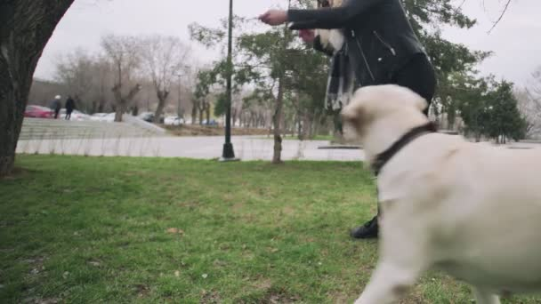 Attractive Woman Training Her labrador dog in the city park