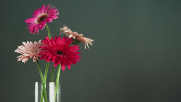 Male hand putts red gerbera in a glass vase with other colorful gerbera flowers