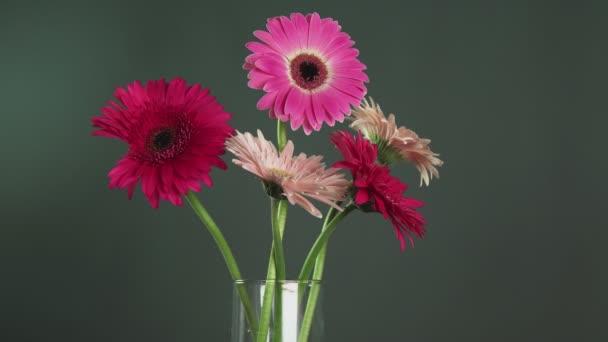 Mužská ruka vezme červenou gerber a vrátí se do skleněné vázy s dalšími barevnými gerber květy