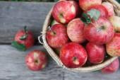 Basket with heap of apple harvest in fall garden