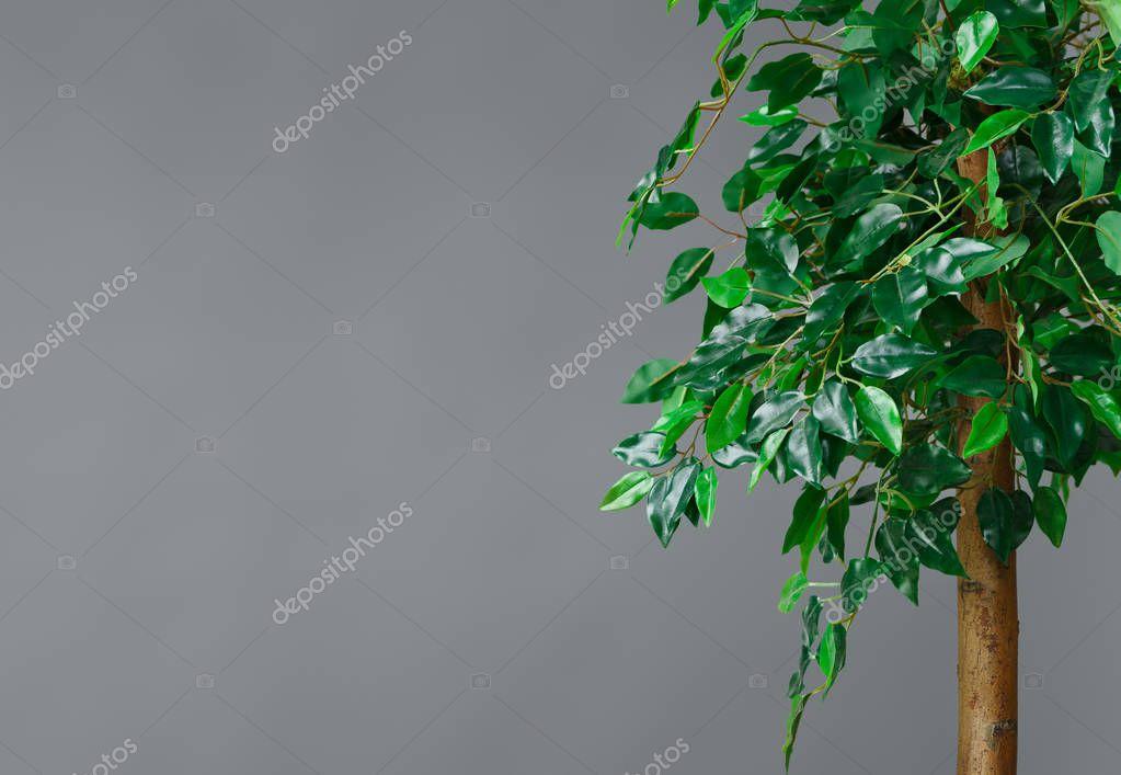 Plants in interior concept, copy space