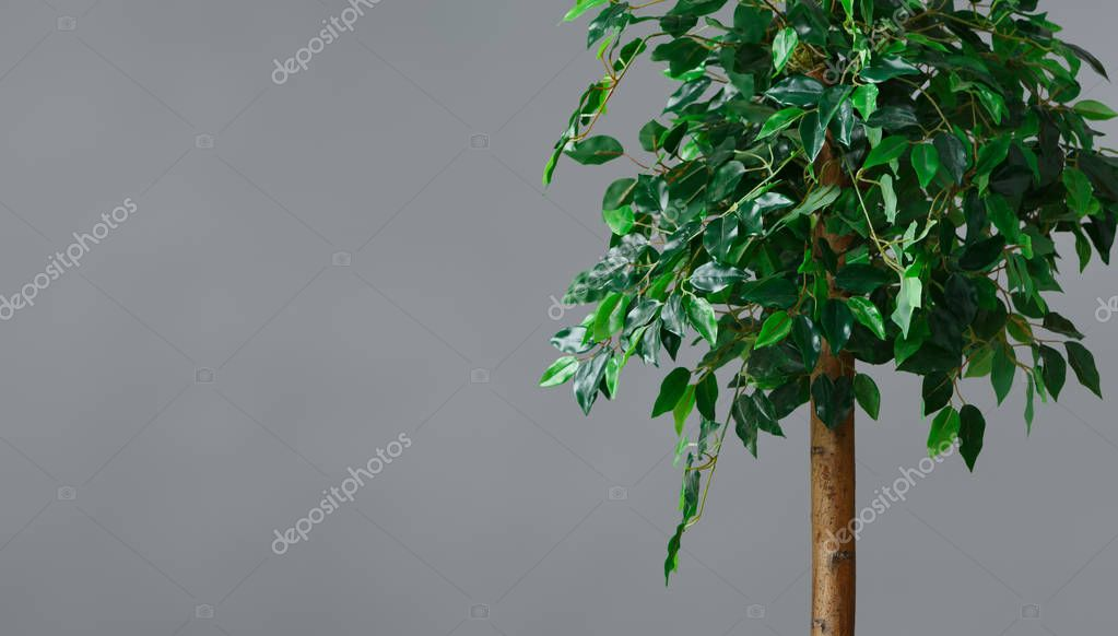 Greenery in interior concept, copy space