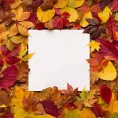 helle und farbenfrohe Herbstrahmen aus fallenden Blättern