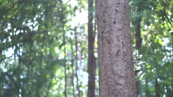 Zelené stromy džungle a palmy proti modrému nebi a zářícímu slunci. Cestovní dovolená Příroda koncepce. Vyhledat zobrazení v tropickém lese na pozadí