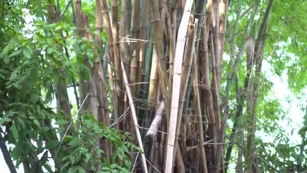 zelený bambus v lese.