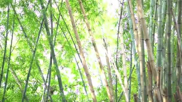Green bamboo in the forest.