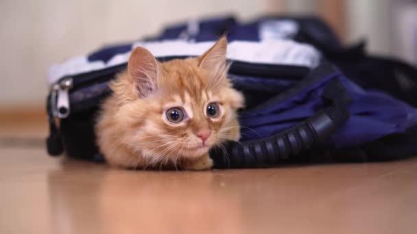 Zázvor kotě vlezl do batohu pro výlet s fotografické vybavení a hry vypadá sezení.
