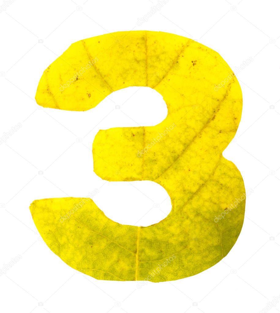 Digit 3 carved of autumn leaves, isolated on white background, closeup