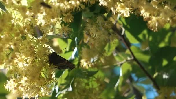 Motýlí let pomalý pohyb na slunci na stromě