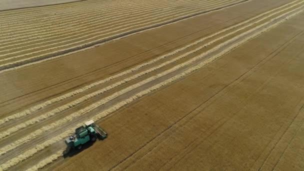 Vzdušné záběry. Sklízecí Komr shromažďuje pšenici. Resekční obilné pole.