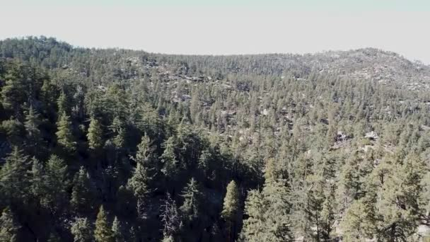Aerial shot of Californian pine tree forest