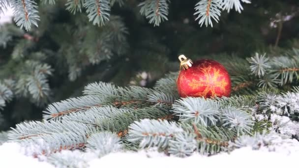 Red christmas ball on the Fir Branch covered with Snow.