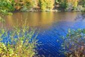 Žluté podzimní stromy a lesní jezírko. Podzimní stromy v Německu.
