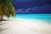 Fotografie Tropické pláže Maledivy s kokosovými palmami a modrá obloha.