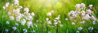 Small wildflowers on grass meadow. Spring background.