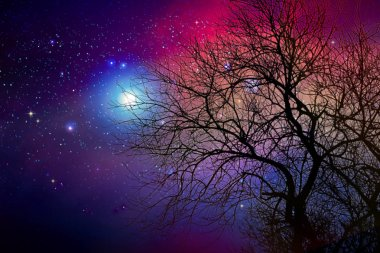 Milky Way star in night skies, full moon and old tree.