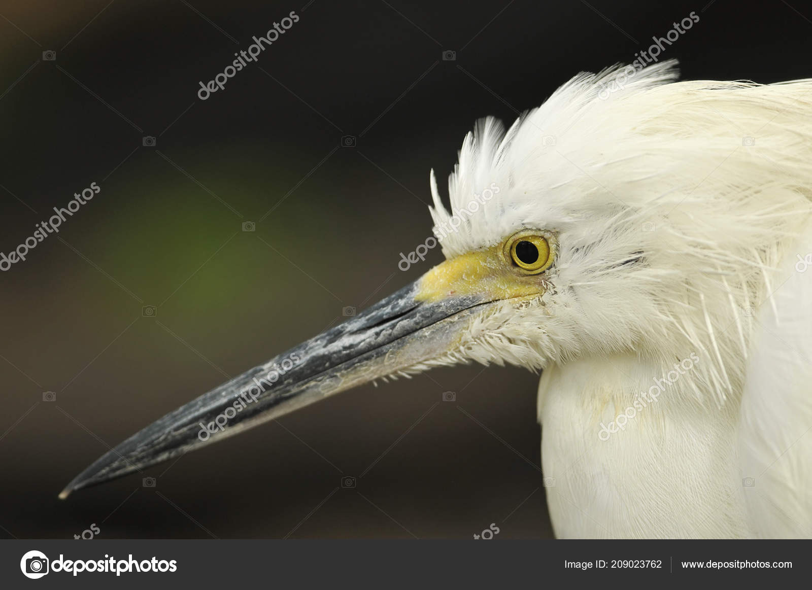 Φωτογραφίες από μεγάλο λευκό πουλί όργιο λεσβίες