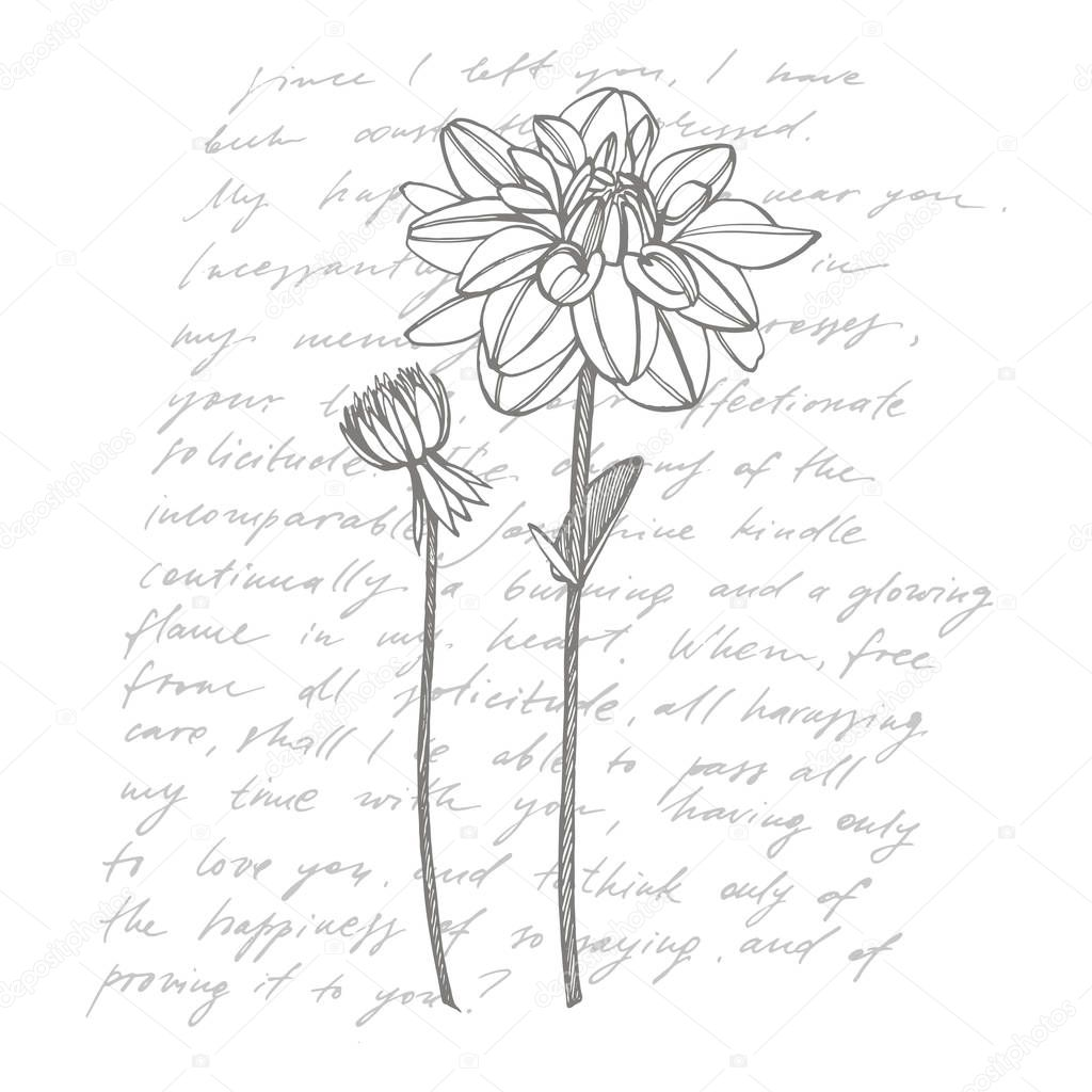 Hand Drawn Ink Dahlias Floral Elements Graphic Flowers Illustrations Botanical Plant Illustration Handwritten Abstract Text Premium Vector In Adobe Illustrator Ai Ai Format Encapsulated Postscript Eps Eps Format