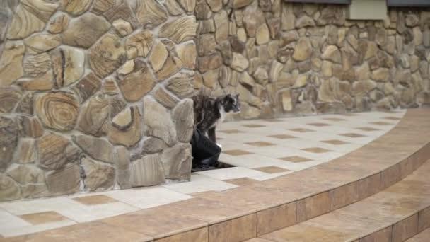 Kočka v zahradě poblíž vchodu do rodinného domu