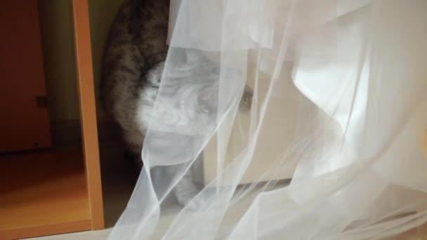 Svatební šaty v pokoji a kočka