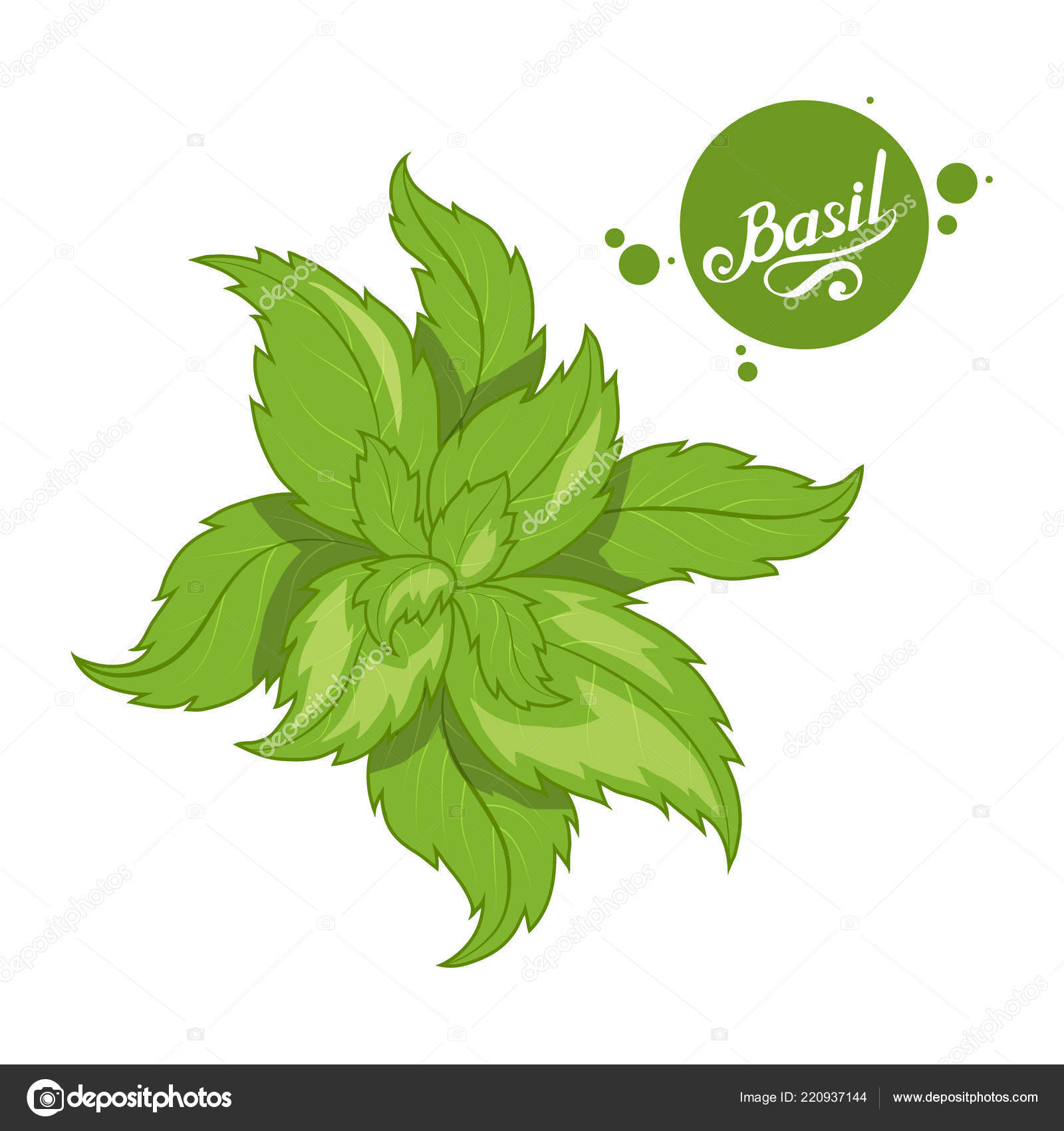 Basil Logo Hand Drawn Basil Leaves Spicy Ingredient Green Basil