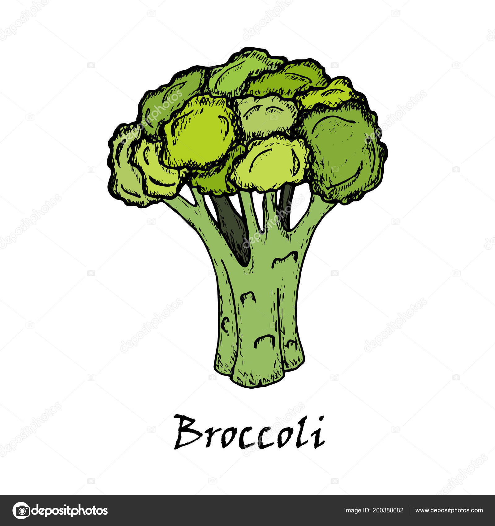 desenho de brócolis isolado no fundo branco vetores de stock