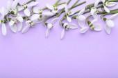 krásná Veronika květiny na fialovém pozadí