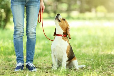 Woman walking with beagle dog in the park
