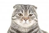 Fotografie roztomilý kočka na bílém pozadí