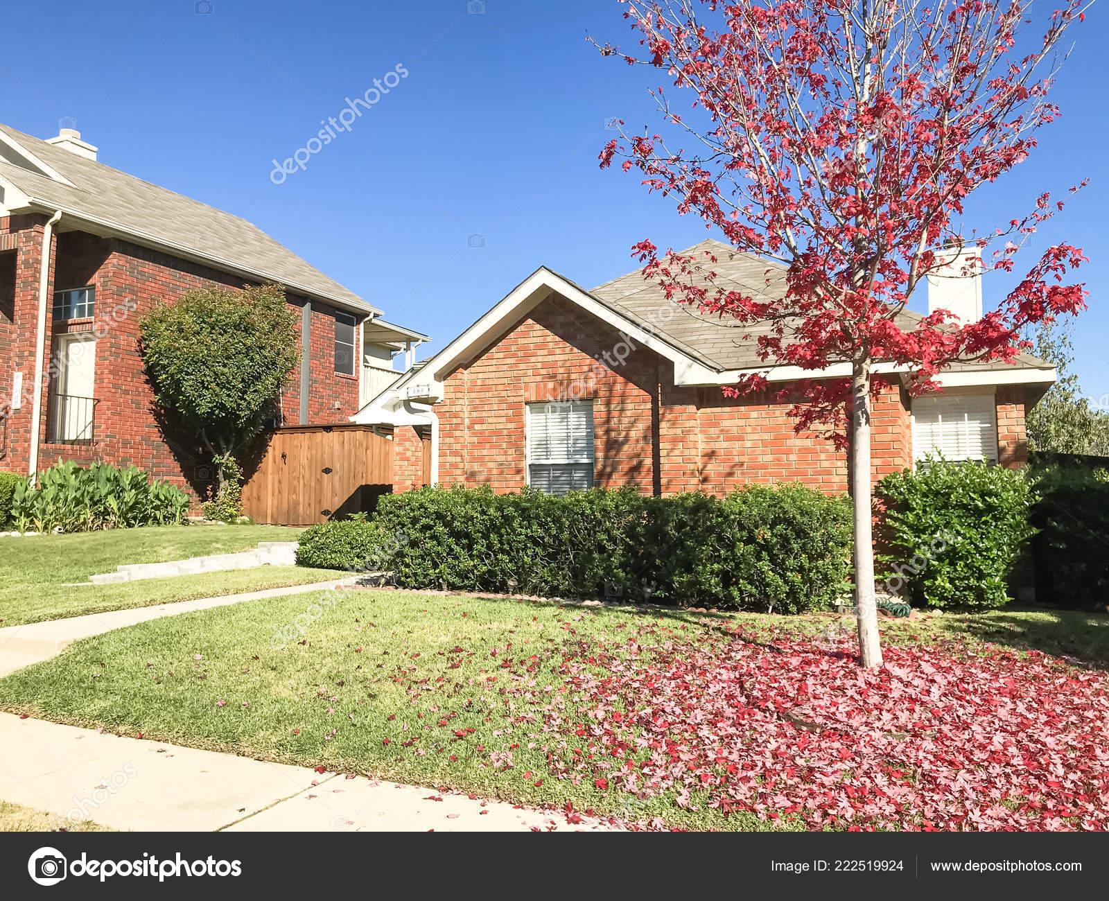 Albero Di Acero Di Colore Rosso Brillante Davanti Abitazione