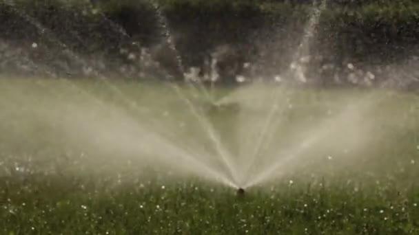 automatische Beregnungsanlage zur Bewässerung des Rasens auf grünem Gras