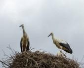Drei junge Vögel im Nest lernen das Fliegen. vor dem Hintergrund eines bewölkten Himmels