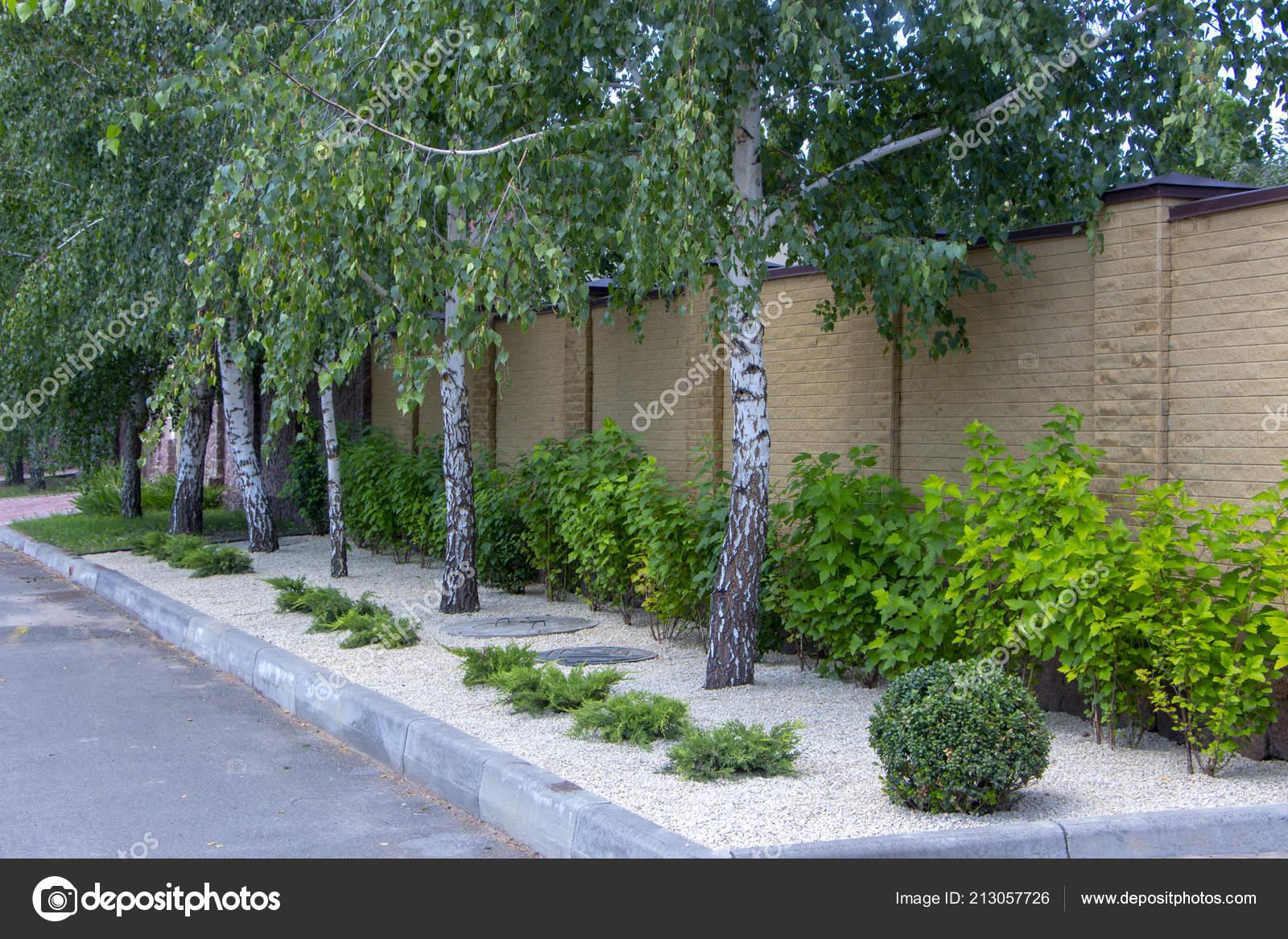 Modern Garden Design Coniferous Plants Garden U2014 Stock Photo