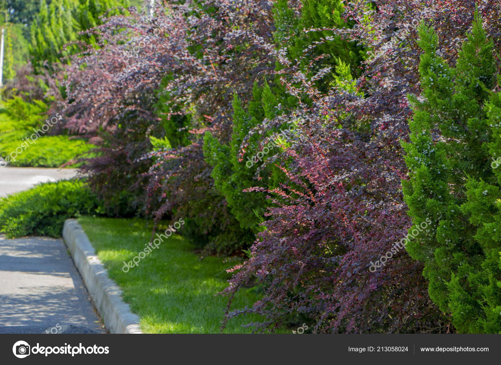 Modern Garden Design Coniferous Plants Garden Stock Photo
