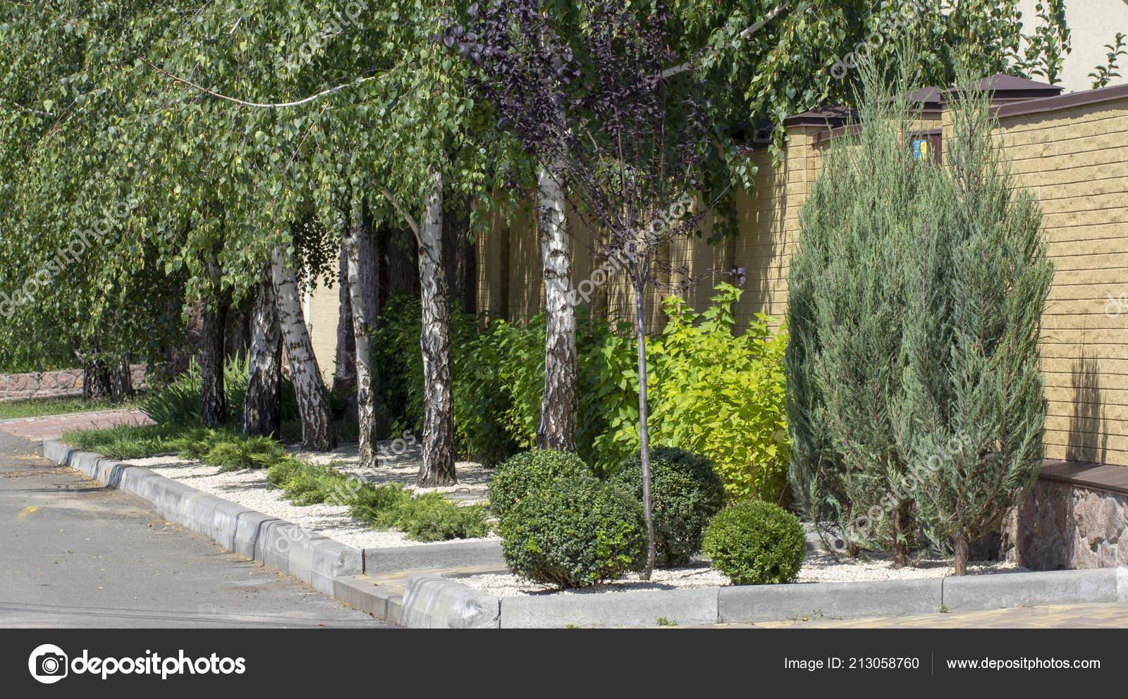 Végétaux Conifères Conception Jardin Moderne Dans Jardin ...