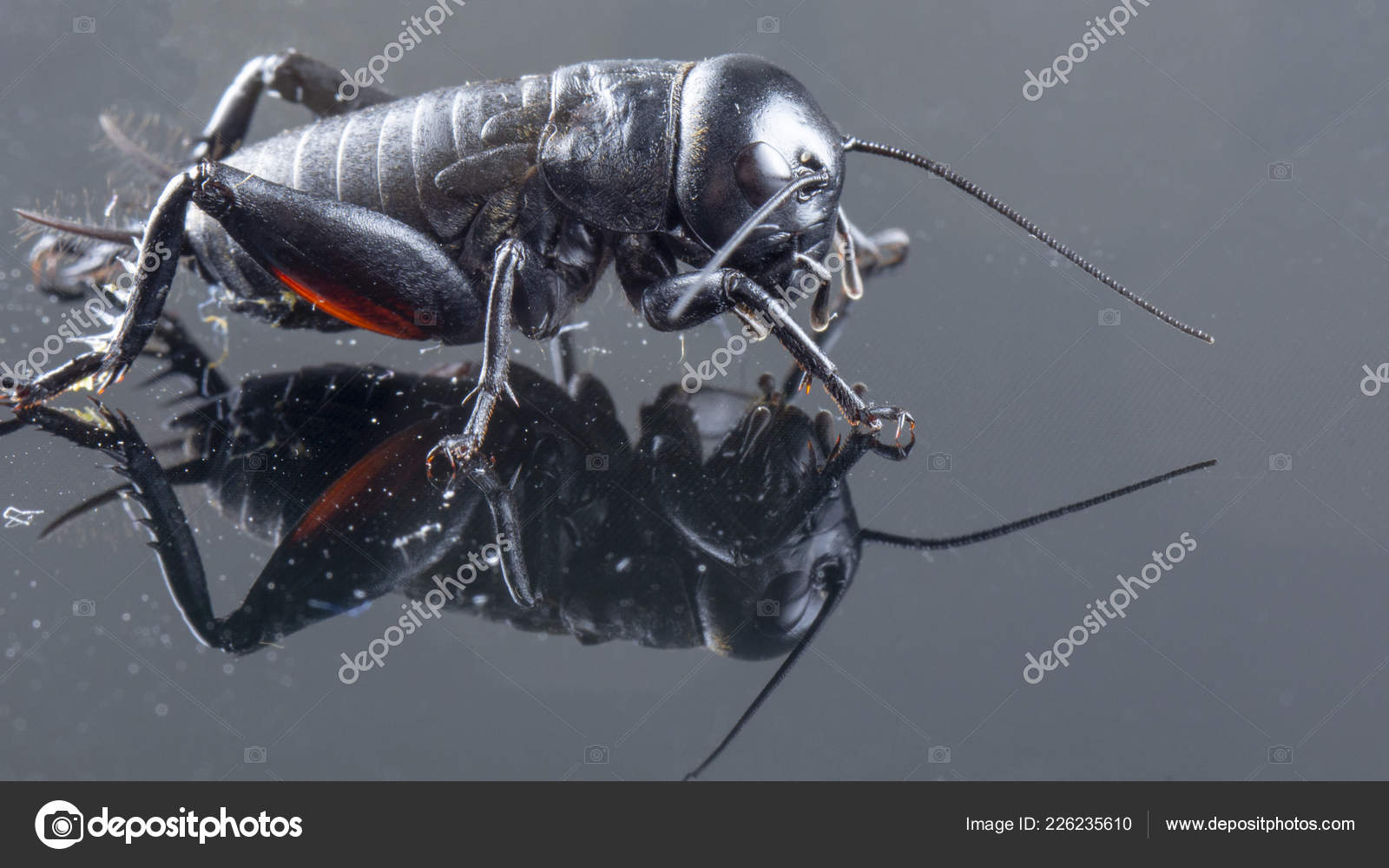 Black House Cricket