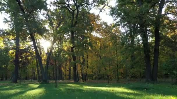 4k Hűvös őszi reggel a Bucha Central Parkban