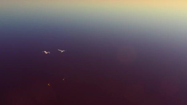 Wildgänse fliegen über den rosa See